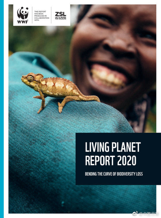报告|报告:全球动物数量50年下降超三分之二